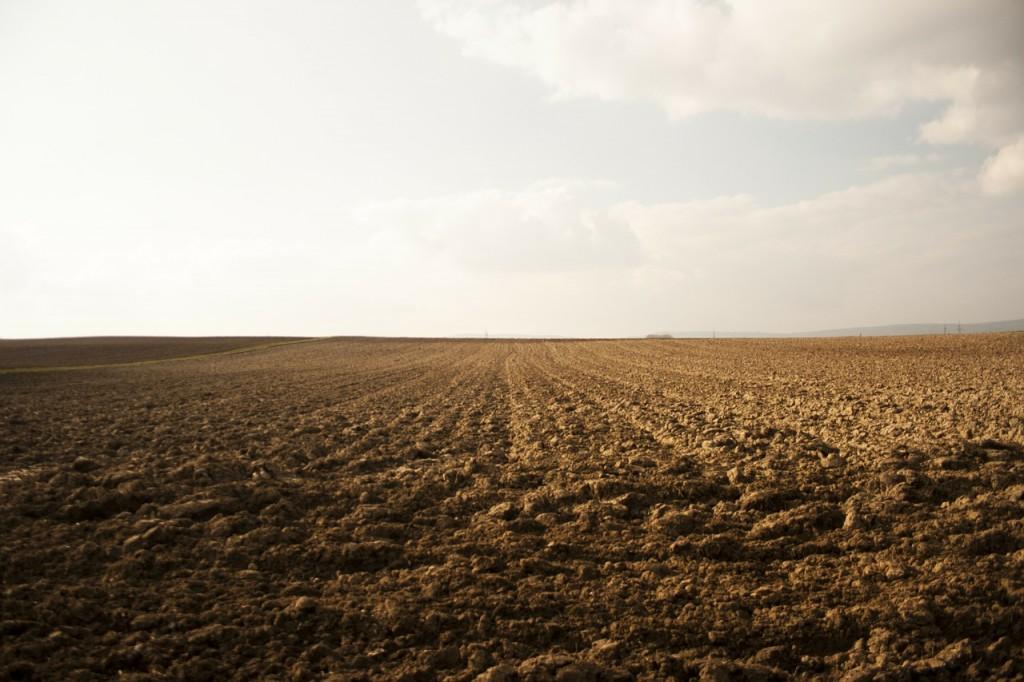 field-283210_1280