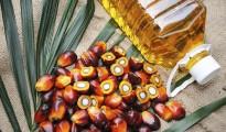 red plam oil