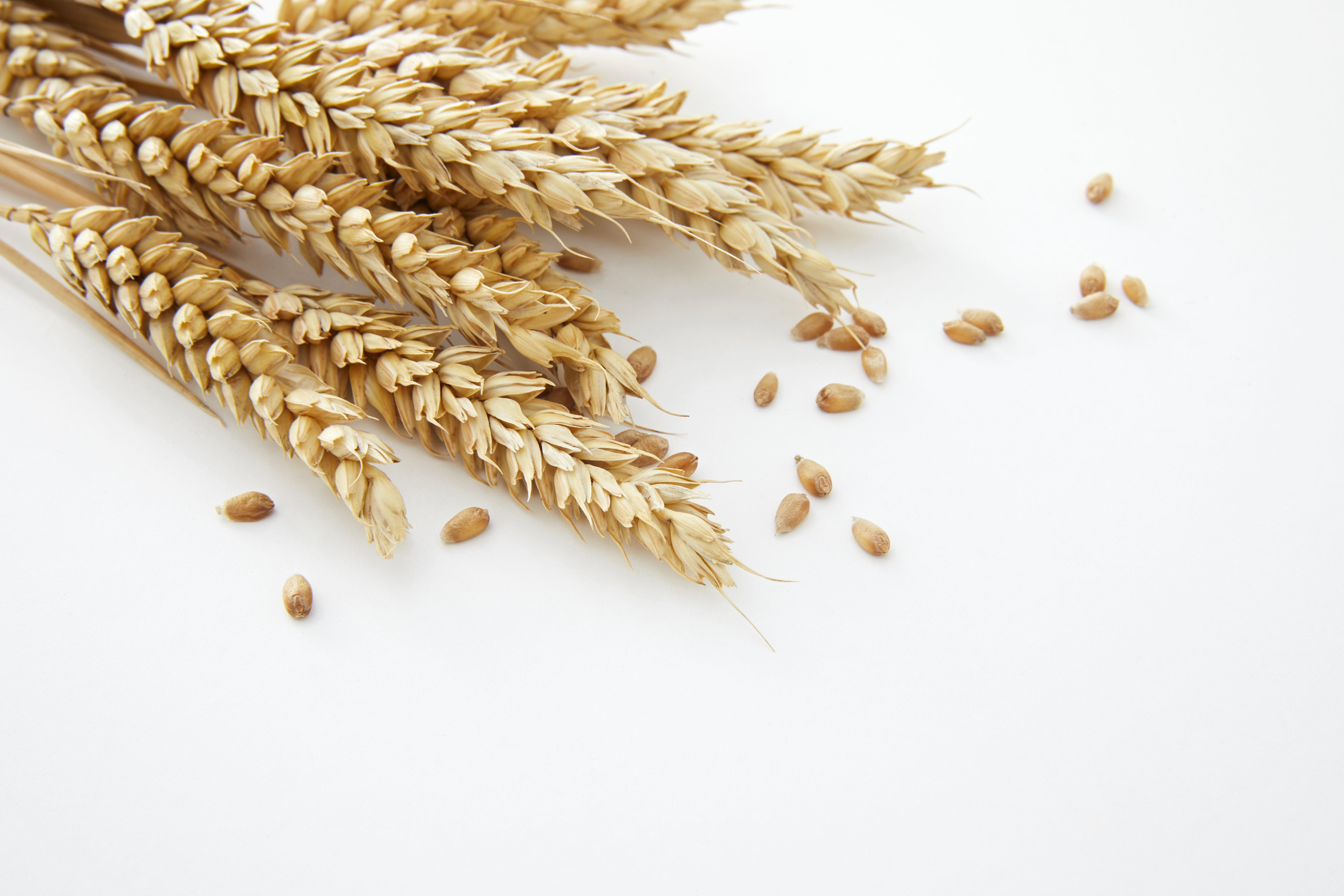 Coeliac Disease : The myths and facts you need to know